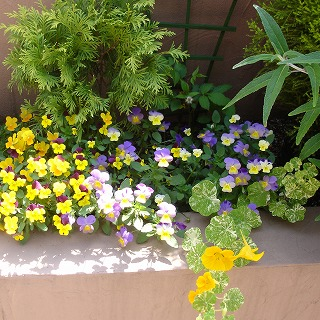お花いっぱい♪